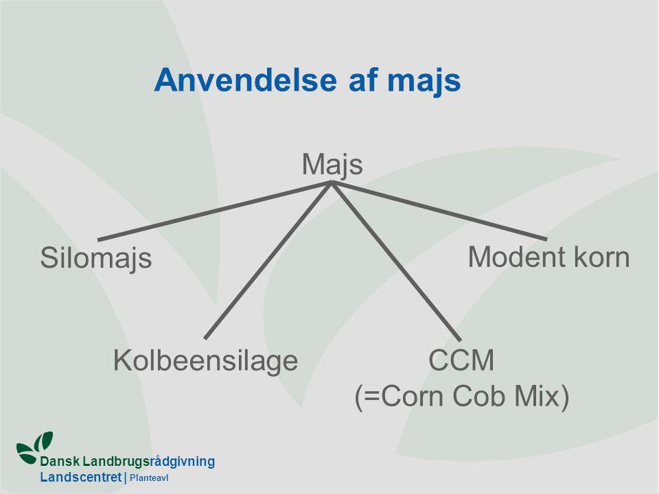 Dansk Landbrugsrådgivning Landscentret | Planteavl Anvendelse af majs Majs Silomajs KolbeensilageCCM (=Corn Cob Mix) Modent korn