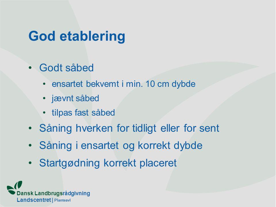 Dansk Landbrugsrådgivning Landscentret | Planteavl God etablering Godt såbed ensartet bekvemt i min.