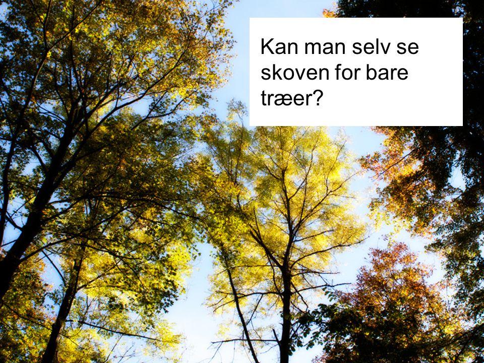 Kan man selv se skoven for bare træer