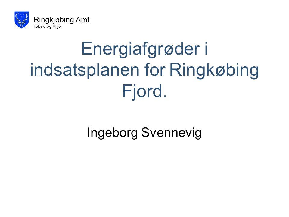 Energiafgrøder i indsatsplanen for Ringkøbing Fjord.