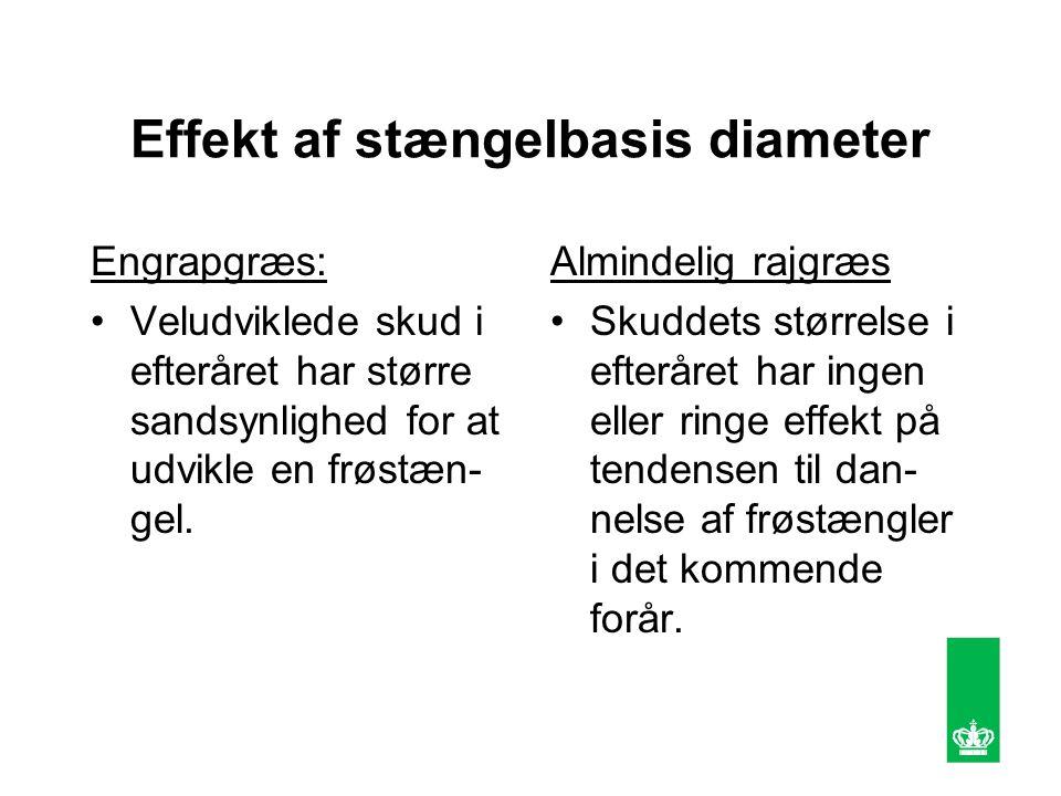 Effekt af stængelbasis diameter Engrapgræs: Veludviklede skud i efteråret har større sandsynlighed for at udvikle en frøstæn- gel.