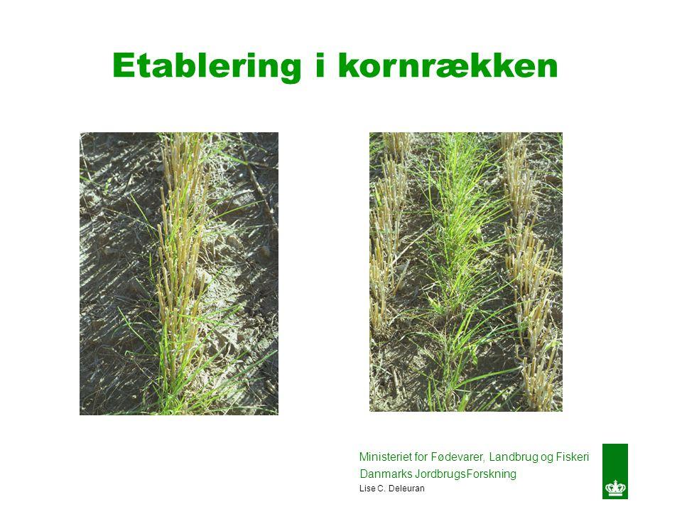Etablering i kornrækken Ministeriet for Fødevarer, Landbrug og Fiskeri Danmarks JordbrugsForskning Lise C.