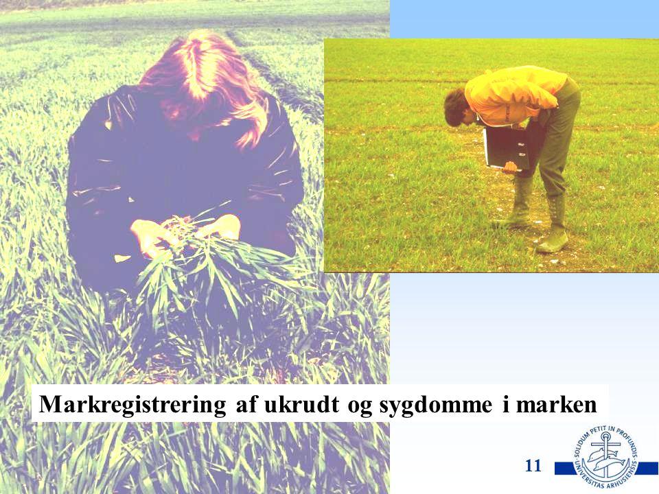 DJF, Flakkebjerg Lise Nistrup Jørgensen 10 Mulige resultater hvis reduktionspotentialet udnyttes Opskalerer fra forsøgene til DK's kornareal og indfrier reduktionspotentialet for herbicider kan BI sænkes til 1,9 Der vil kunne spares 50-130 kr/ha til kemi, svarende til ca.