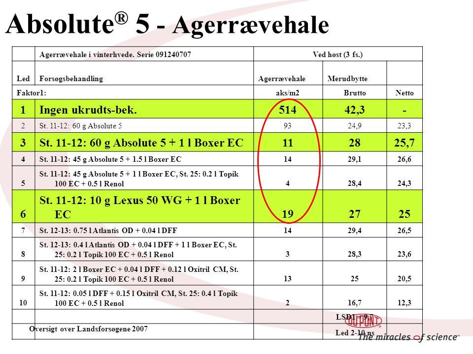 Absolute ® 5 - Agerrævehale Agerrævehale i vinterhvede.