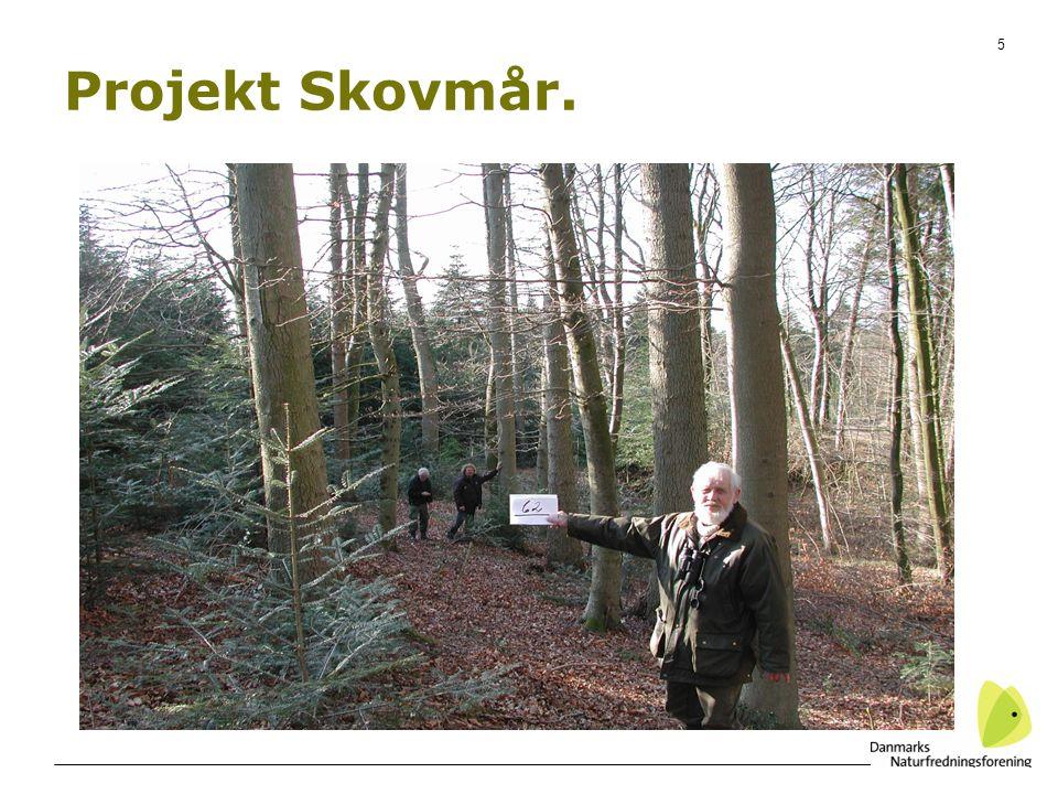 5 Projekt Skovmår.