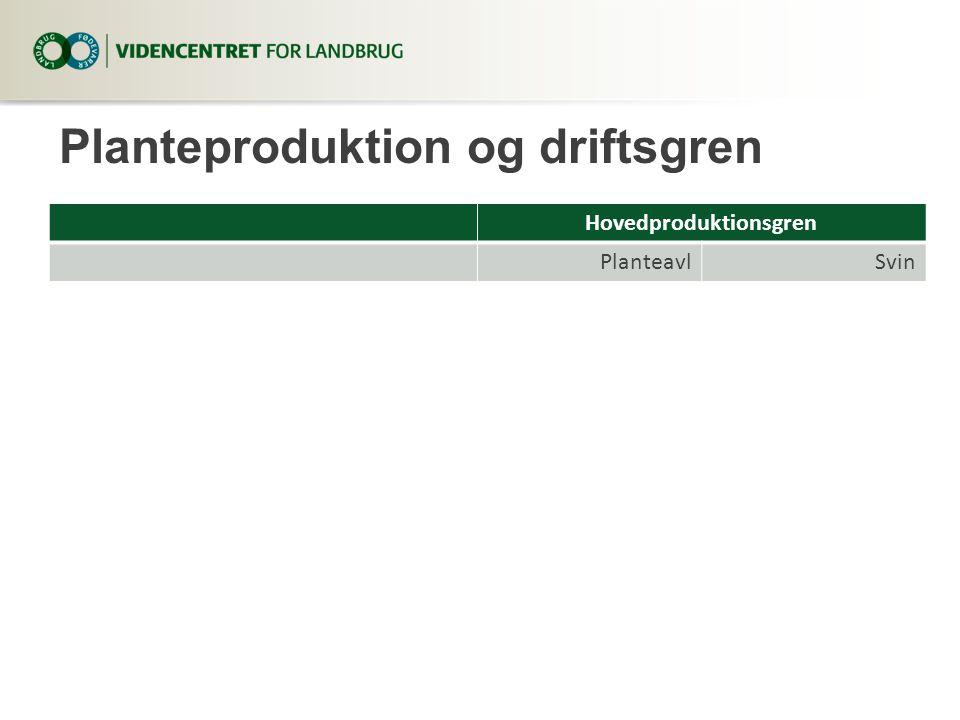 Planteproduktion og driftsgren Hovedproduktionsgren PlanteavlSvin