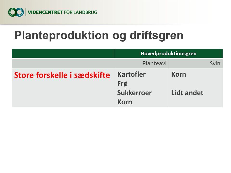 Planteproduktion og driftsgren Hovedproduktionsgren PlanteavlSvin Store forskelle i sædskifte Kartofler Frø Sukkerroer Korn Lidt andet
