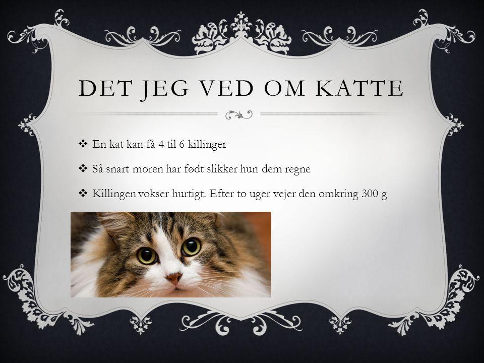 DET JEG VED OM KATTE  En kat kan få 4 til 6 killinger  Så snart moren har født slikker hun dem regne  Killingen vokser hurtigt.