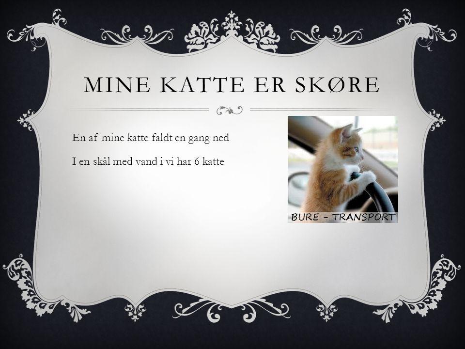 MINE KATTE ER SKØRE En af mine katte faldt en gang ned I en skål med vand i vi har 6 katte