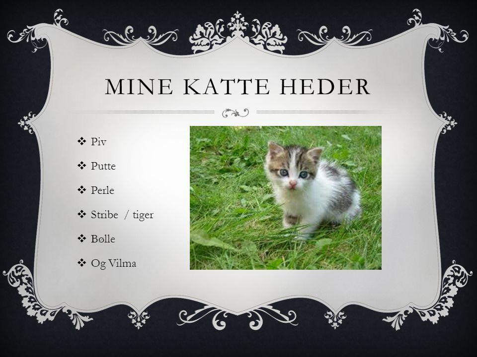 MINE KATTE HEDER  Piv  Putte  Perle  Stribe / tiger  Bølle  Og Vilma