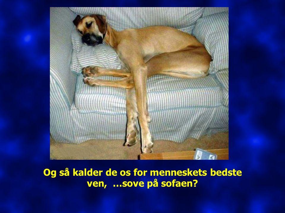 Og så kalder de os for menneskets bedste ven, …sove på sofaen