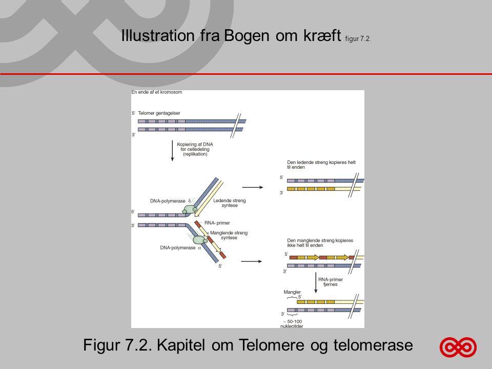 Illustration fra Bogen om kræft figur 7.2. Figur 7.2. Kapitel om Telomere og telomerase
