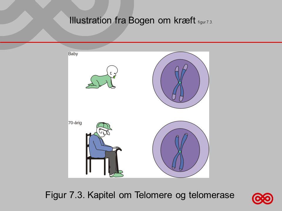 Illustration fra Bogen om kræft figur 7.3. Figur 7.3. Kapitel om Telomere og telomerase