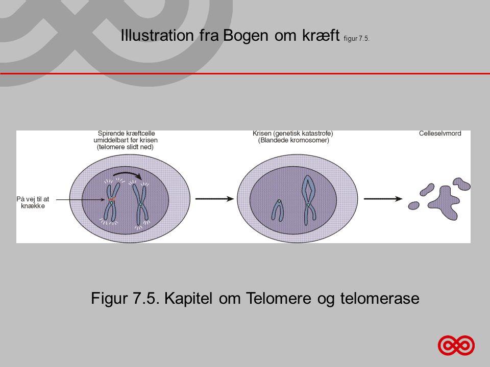 Illustration fra Bogen om kræft figur 7.5. Figur 7.5. Kapitel om Telomere og telomerase