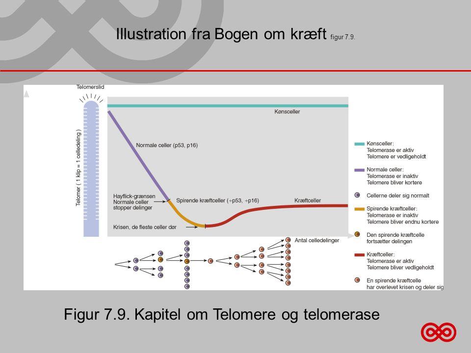 Illustration fra Bogen om kræft figur 7.9. Figur 7.9. Kapitel om Telomere og telomerase