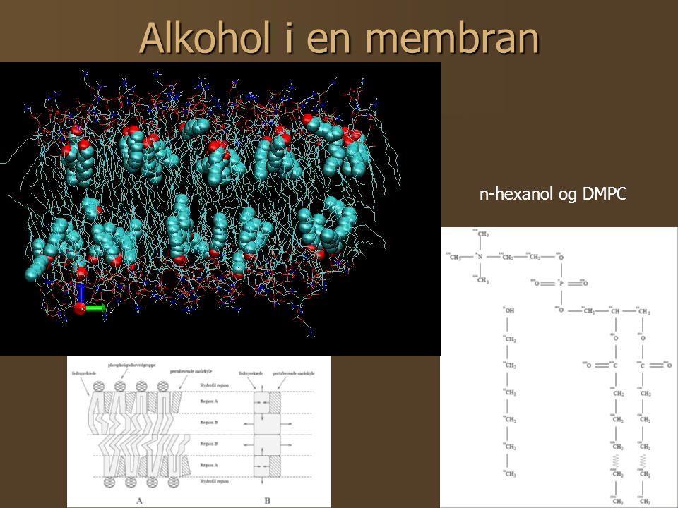 13 Alkohol i en membran n-hexanol og DMPC