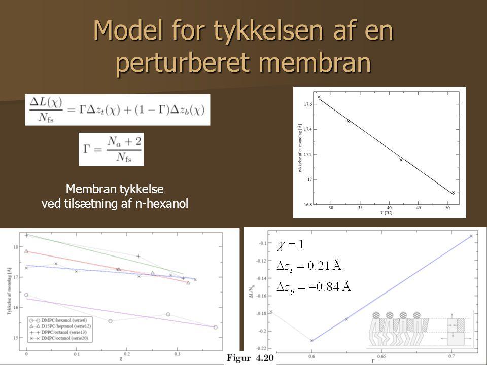 31 Model for tykkelsen af en perturberet membran Membran tykkelse ved tilsætning af n-hexanol