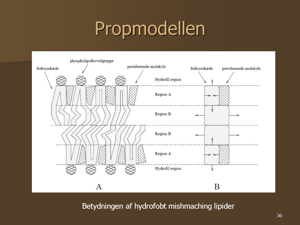 36 Propmodellen Betydningen af hydrofobt mishmaching lipider