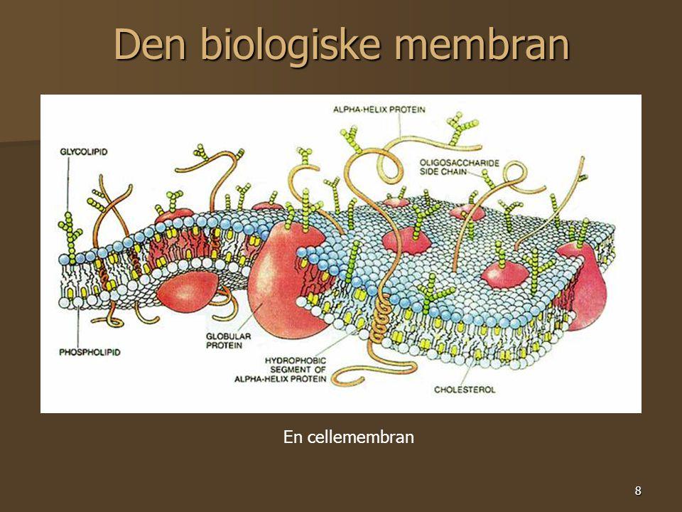 8 Den biologiske membran En cellemembran