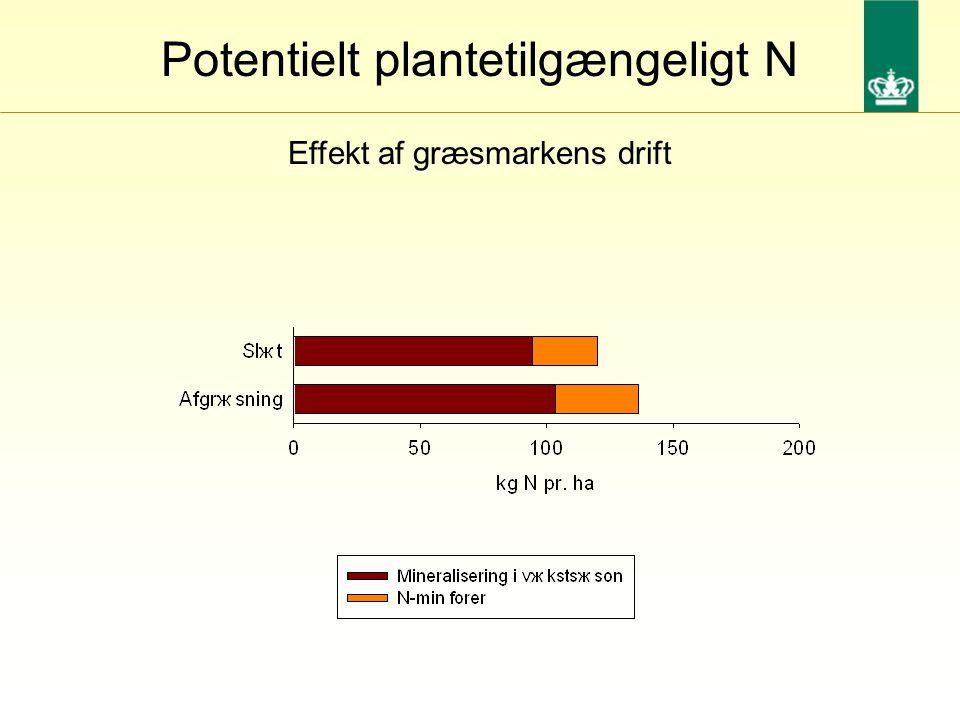 Effekt af græsmarkens drift Potentielt plantetilgængeligt N