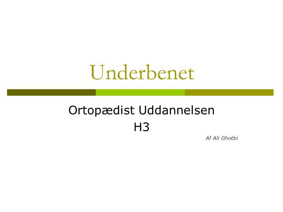 Underbensknoglerne  Os Tibia, skinnebenet  Bærer proximalt to ledflader Condylus lateralis og medialis Adskilles af eminentia intercondylaris  Fortil, prox.