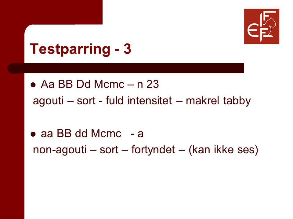Testparring - 3 Aa BB Dd Mcmc – n 23 agouti – sort - fuld intensitet – makrel tabby aa BB dd Mcmc - a non-agouti – sort – fortyndet – (kan ikke ses)
