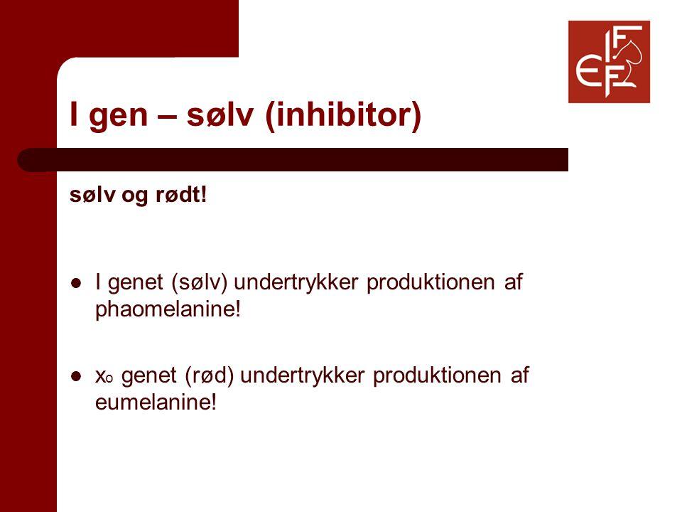 I gen – sølv (inhibitor) sølv og rødt. I genet (sølv) undertrykker produktionen af phaomelanine.