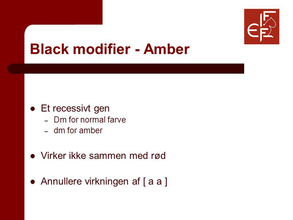 Black modifier - Amber Et recessivt gen – Dm for normal farve – dm for amber Virker ikke sammen med rød Annullere virkningen af [ a a ]
