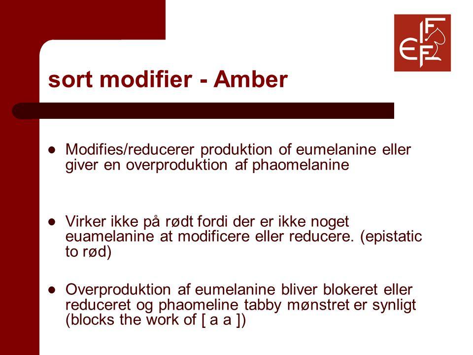 sort modifier - Amber Modifies/reducerer produktion of eumelanine eller giver en overproduktion af phaomelanine Virker ikke på rødt fordi der er ikke noget euamelanine at modificere eller reducere.
