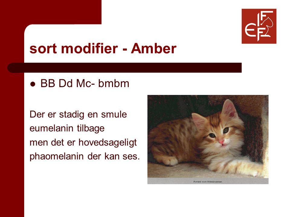sort modifier - Amber BB Dd Mc- bmbm Der er stadig en smule eumelanin tilbage men det er hovedsageligt phaomelanin der kan ses.