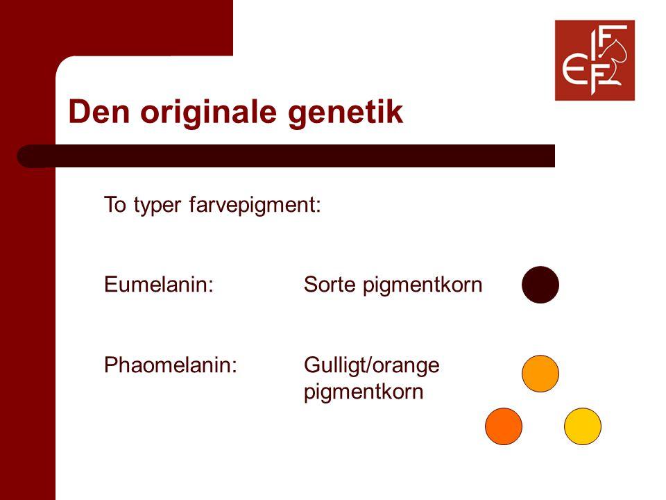 Den originale genetik To typer farvepigment: Eumelanin:Sorte pigmentkorn Phaomelanin:Gulligt/orange pigmentkorn
