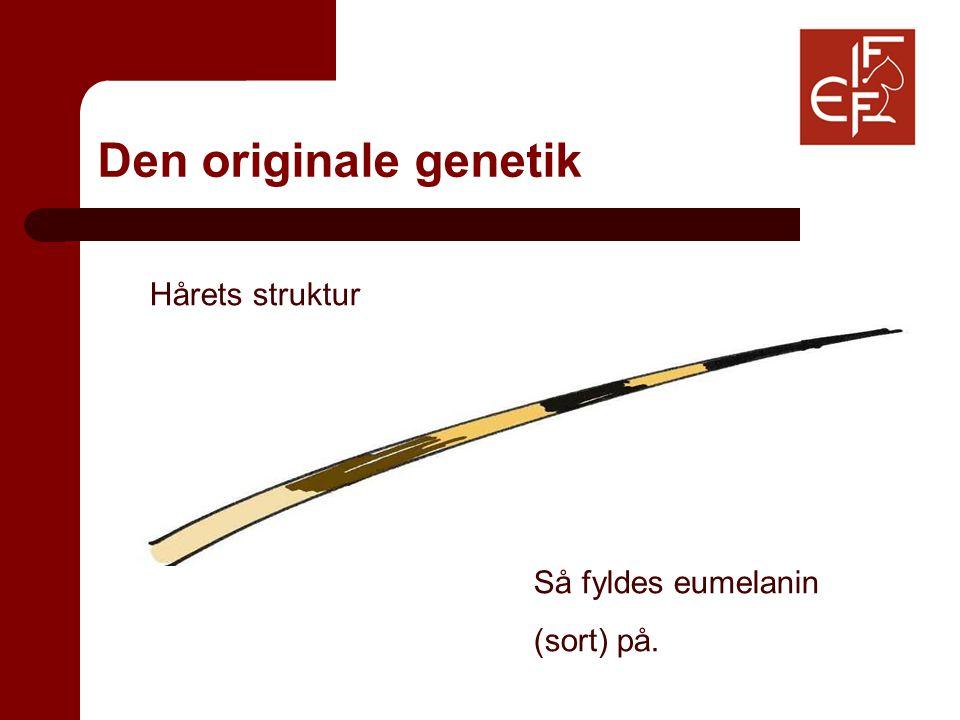 Den originale genetik Hårets struktur Så fyldes eumelanin (sort) på.
