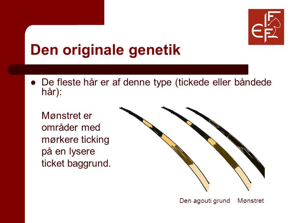 Den originale genetik De fleste hår er af denne type (tickede eller båndede hår): Mønstret er områder med mørkere ticking på en lysere ticket baggrund.