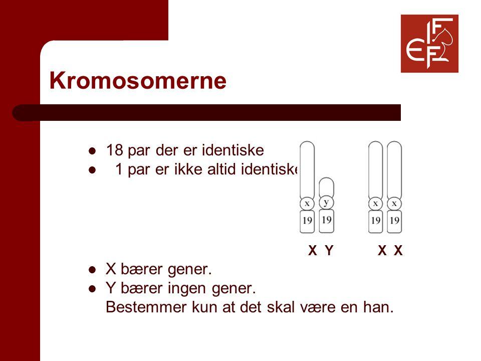 Kromosomerne 18 par der er identiske 1 par er ikke altid identiske X Y X X X bærer gener.