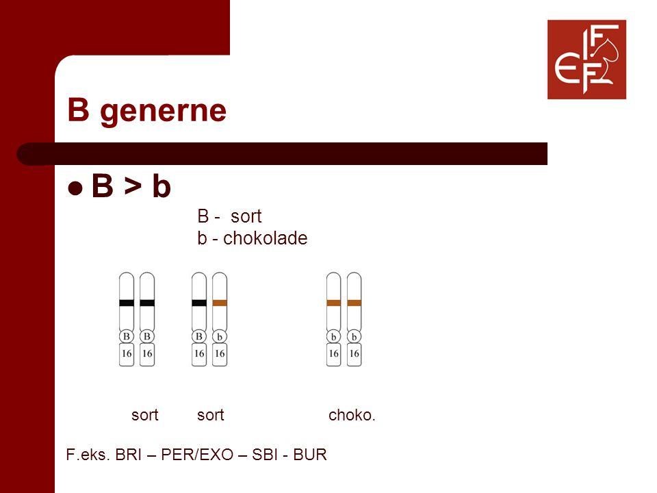 B generne B > b B - sort b - chokolade sortsortchoko. F.eks. BRI – PER/EXO – SBI - BUR