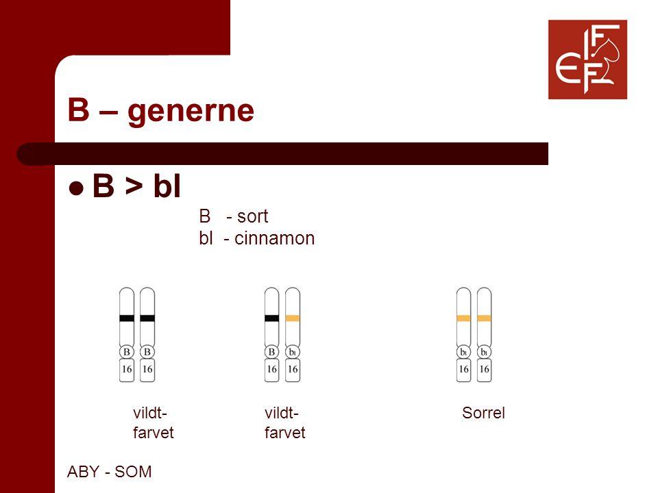 B – generne B > bl B - sort bl - cinnamon vildt-vildt-Sorrelfarvet ABY - SOM