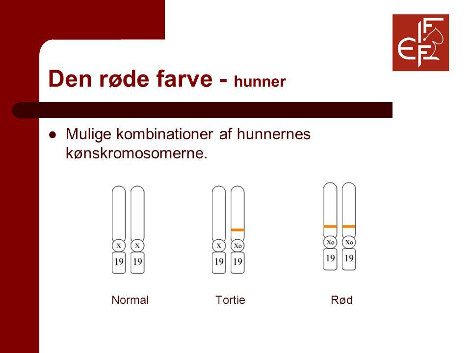 Den røde farve - hunner Mulige kombinationer af hunnernes kønskromosomerne. Normal TortieRød