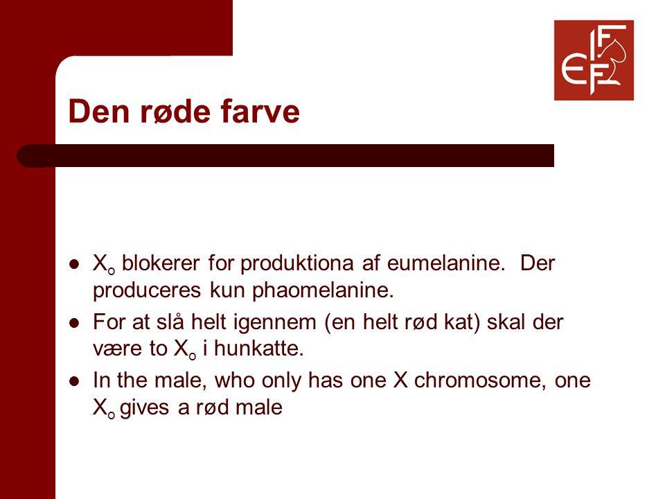 Den røde farve X o blokerer for produktiona af eumelanine.