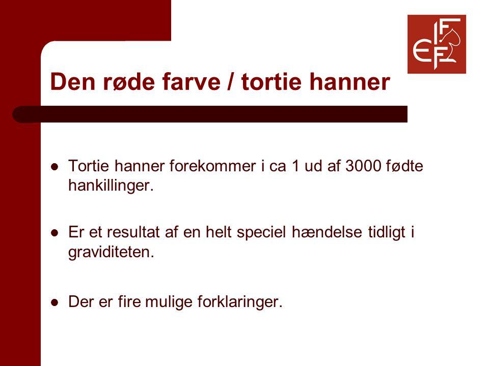 Den røde farve / tortie hanner Tortie hanner forekommer i ca 1 ud af 3000 fødte hankillinger.