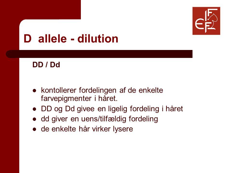 D allele - dilution DD / Dd kontollerer fordelingen af de enkelte farvepigmenter i håret.