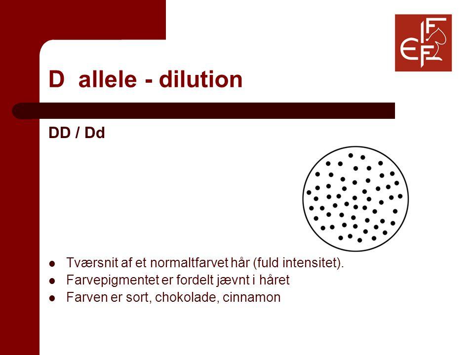D allele - dilution DD / Dd Tværsnit af et normaltfarvet hår (fuld intensitet).
