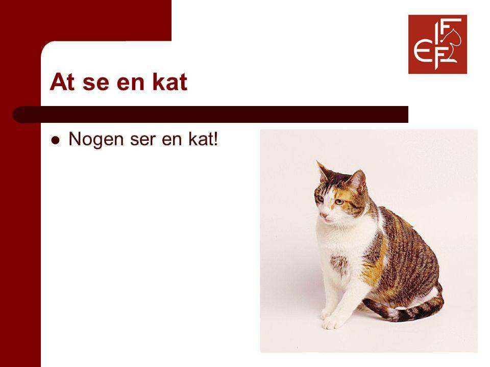 At se en kat Nogen ser en kat!