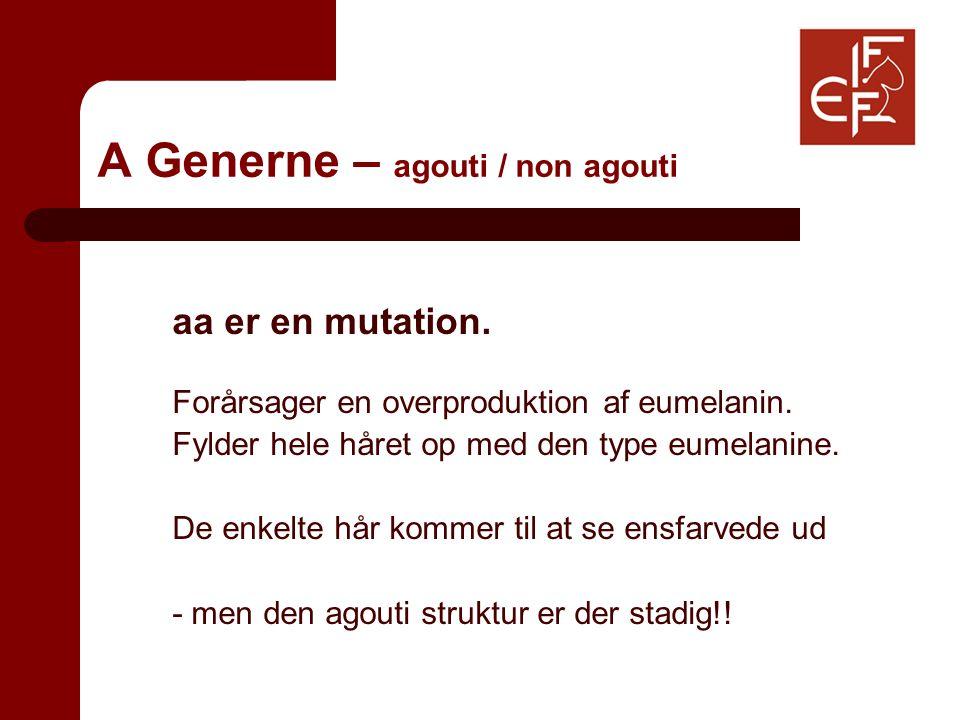 A Generne – agouti / non agouti aa er en mutation.