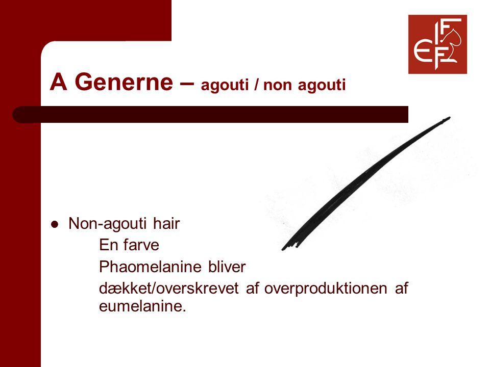 A Generne – agouti / non agouti Non-agouti hair En farve Phaomelanine bliver dækket/overskrevet af overproduktionen af eumelanine.