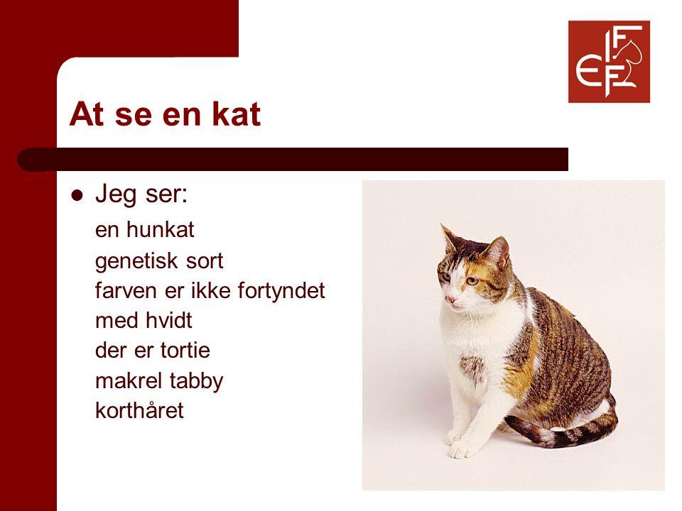 At se en kat Jeg ser: en hunkat genetisk sort farven er ikke fortyndet med hvidt der er tortie makrel tabby korthåret