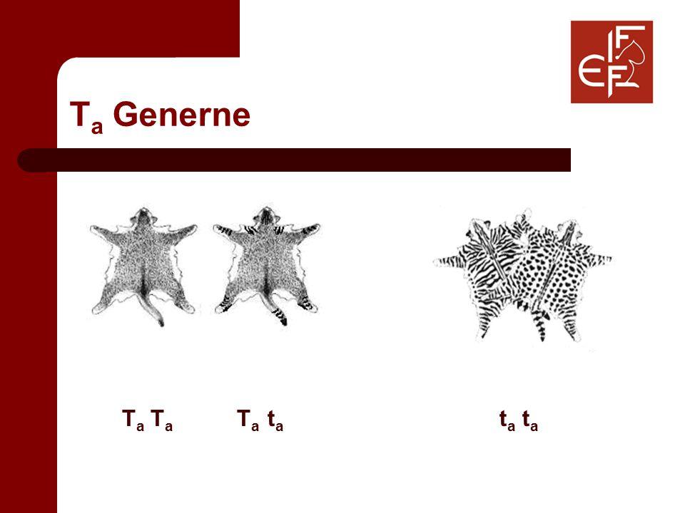 T a Generne T a T a T a t a t a t a