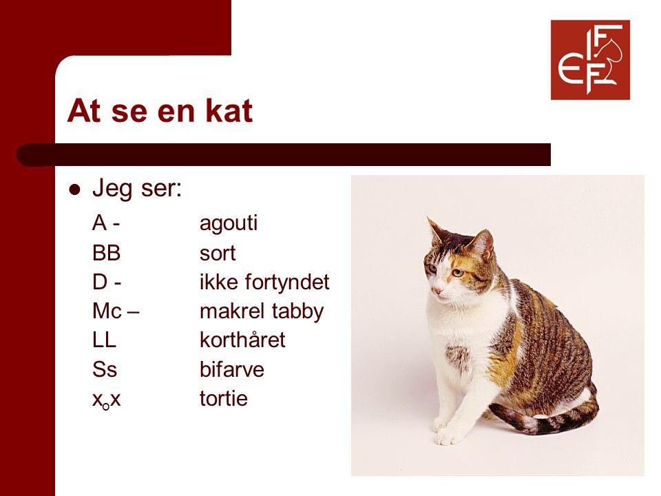 At se en kat Jeg ser: A -agouti BBsort D -ikke fortyndet Mc –makrel tabby LLkorthåret Ssbifarve x o xtortie