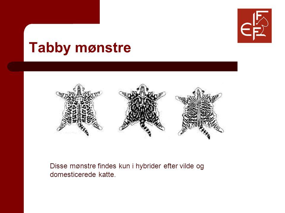 Disse mønstre findes kun i hybrider efter vilde og domesticerede katte.