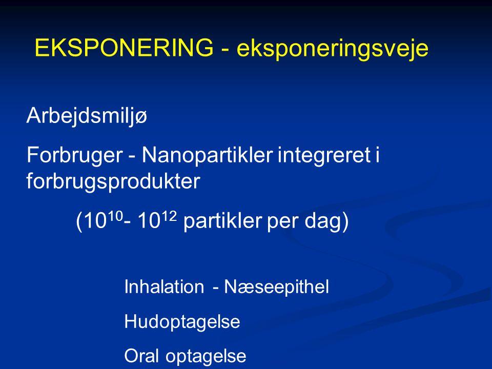 EKSPONERING - eksponeringsveje Arbejdsmiljø Forbruger - Nanopartikler integreret i forbrugsprodukter (10 10 - 10 12 partikler per dag) Inhalation - Næseepithel Hudoptagelse Oral optagelse