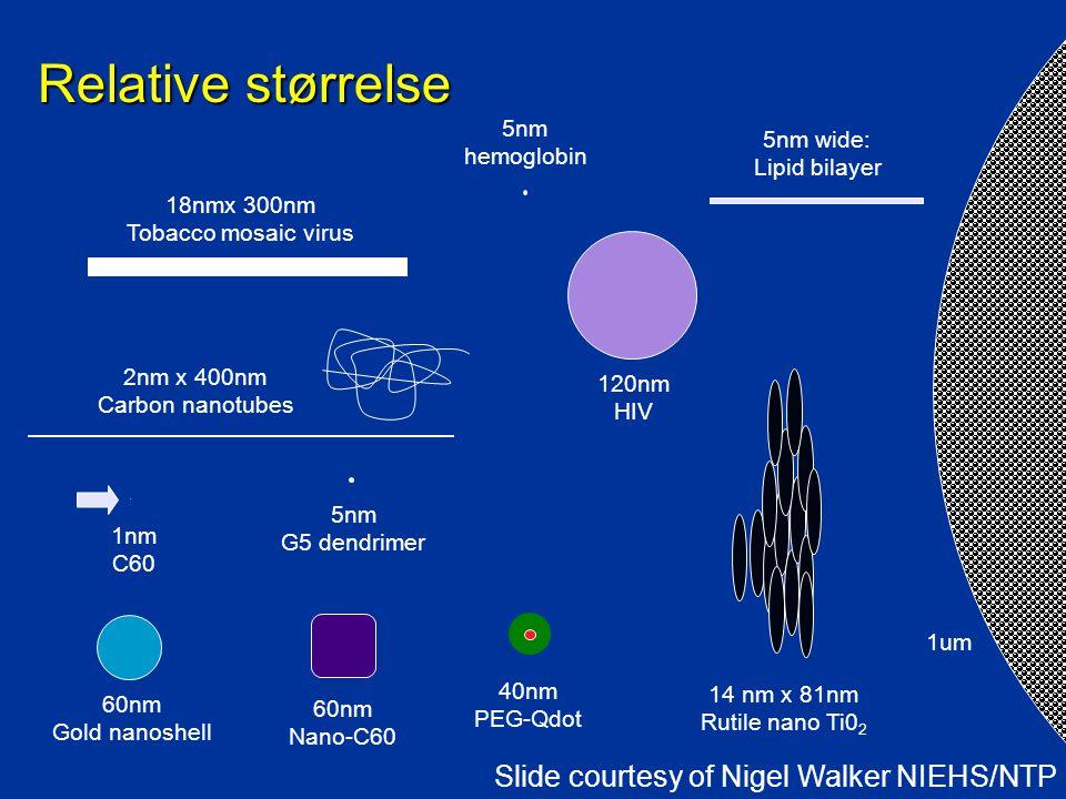 Relative størrelse 60nm Gold nanoshell 2nm x 400nm Carbon nanotubes 40nm PEG-Qdot 5nm hemoglobin 5nm wide: Lipid bilayer 5nm G5 dendrimer 14 nm x 81nm Rutile nano Ti0 2 1um 1nm C60 60nm Nano-C60 18nmx 300nm Tobacco mosaic virus 120nm HIV Slide courtesy of Nigel Walker NIEHS/NTP